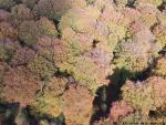 Foret vue du cile par drone