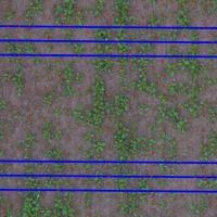 Comptage du Colza en vue aérienne par drone