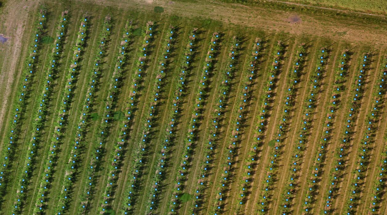 Comptage végétaux verger par drone agricole