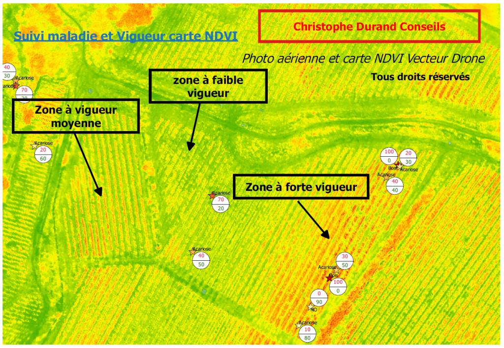 Domaine viticole suivi maladie et vigueur des végétaux vues par drone