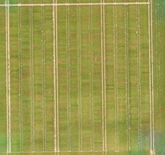 inspection aérienne par drone dans l'agriculture