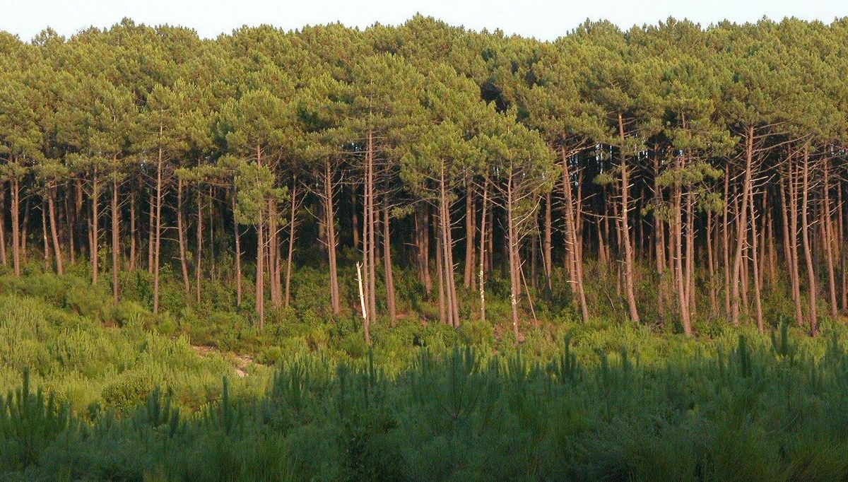 Photo aérienne Les Landes