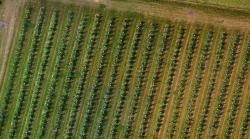 Comptage vegetaux verger par drone agricole
