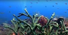 Coraux en prise de vue sous marine de fonds marins