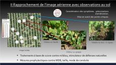 Etude et analyse par drone de la sante des parcelles de vignes sur cartographie ndvi