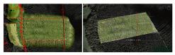 Gestion parcelle forestière par images aériennes de drone