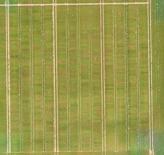 Inspection aérienne par drone dans l agriculture