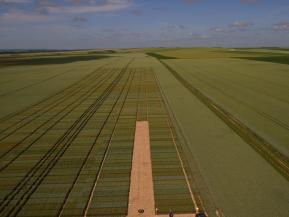 Inspection par drone d un champ de blé dans exploitation agricole