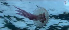 Méduse photographie par photographe plongeur professionnel