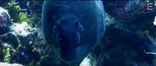 Murène photographiée par photographe plongeur professionnel
