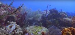 Photo de coraux en plongée sous marine