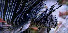 Photo de poisson en plongée sous marine