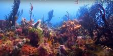Photo sous marine coraux photographie par plongeur professionnel