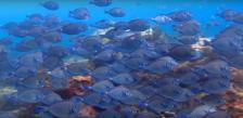Photo sous marine de poissons par plongeur et vidéaste professionnel