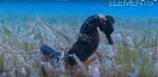 Photo sous marine hippocampe par plongeur et vidéaste professionnel
