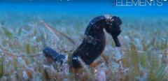 Photo sous marine par plongeur et vidéaste en Limousin