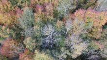 Photographie aérienne de foret par drone