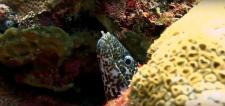 Photographie sous marine par plongeur professionnel