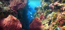 Photographie sous marine par plongeur