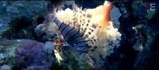 Poisson dans les coraux photographie par photographe plongeur professionnel