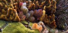 Prise de vue sous marine de fonds marins coraux