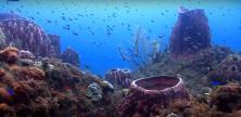 Prises de vues sous marine de fonds marins