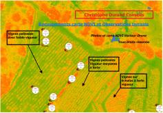 Recoupement carte ndvi et observation des vignes sur terrains