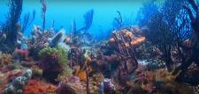 Video sous marines par plongeur vidéaste professionnel