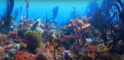 Vidéo sous marines par plongeur vidéaste professionnel
